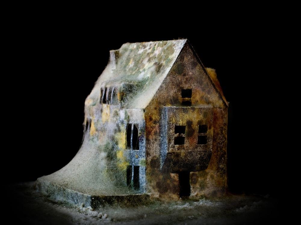 A Moldy House Man Make Home